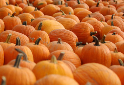 Pumpkins | Pumpkin Must Haves | Fall Favorites
